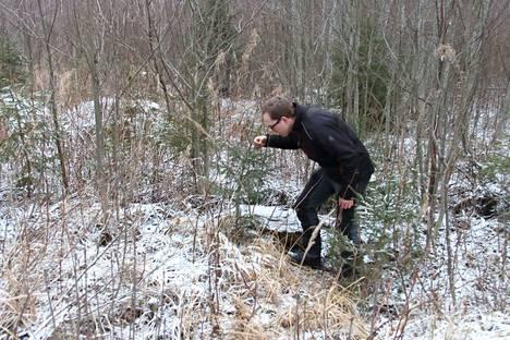 Pienet taimet kärsivät, jos niiden ympäriltä ei raivata risukkoa. Taimikkoa tutkii Jere Tanskanen.