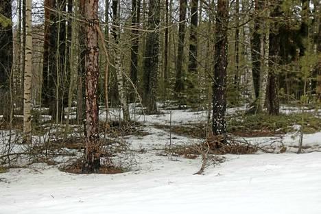 Viikonlopusta plusasteilla pysynyt lämpötila on sulattanut lunta vauhdilla. Paikoin lunta on kuitenkin maastossa vielä kymmenien senttien paksuudelta.