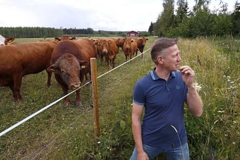 Vehkalahden tila on luomutila Laviassa. Tilalla tuotetaan limousin-nautakarjan vasikoita. Johan-sonni ihmetteli isäntä Juha Vehkalahtea.