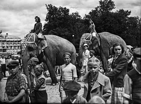"""Porissa vierailleen sirkuksen norsuja tallustelee Raatihuoneen puistossa. Kuva on arkistointitietojen mukaan vuodelta 1950, mutta aikaisemminkin sirkus on Porissa piipahtanut. Satakunnan Kansassa kirjoitettiin 25.9.1949: """"Ei, ei ollenkaan. Kuvamme ei ole Intiasta, vaan Porista, jonne Zoo Cirkus on saapunut. Eilen aamupäivällä kierteli sirkuksen mainoskulkue kaupungilla saaden erityisesti nuorimman kaupunkilaispolven jakamattoman mielenkiinnon osakseen."""""""