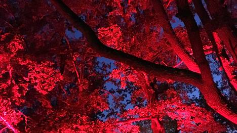 Valkeakoskelle avautuvassa Valometsässä voi näyttää esimerkiksi tältä.