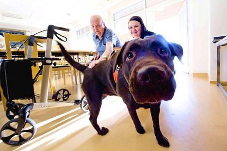 Aksel Weiström kertoo olevansa koiraihmisiä, mutta hän ei omista tällä hetkellä koiraa. Tällä kertaa rapsutettavana kävi Janna Mertalan Unski-koira.