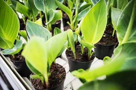 Tekstaripalstalla ehdotetaan, että kukkataimien muovipurkit voisi palauttaa taimitarhaan uudelleen käytettäväksi.