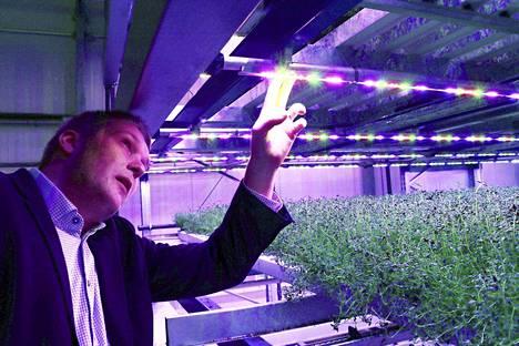 Tässä se on, oivallus joka lämmittää koko kasvatushuoneen led-valoista vapautuvalla energialla, ja yrtit voivat hyvin. Niko Kiviojan vetämä yritys teki kansainvälisen läpimurron.