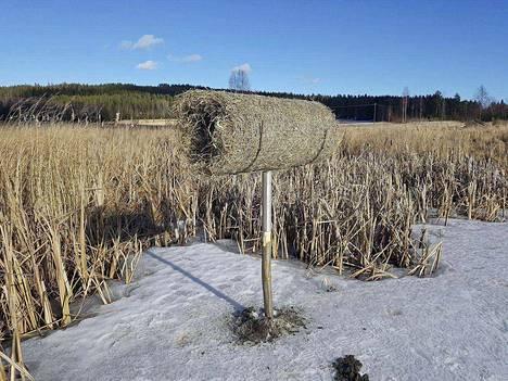 Vajaassa parissa tunnissa metsästäjät rakensivat talkoilla ison kasan keinopesiä sorsille.