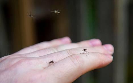Hyttysenpistoilta ei voi välttyä Suomen kesässä.