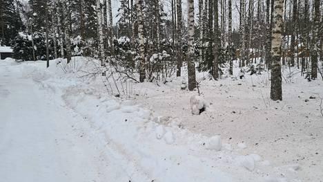 Lumi värjäytyi kellertäväksi Teiskossa tiistaina 23. helmikuuta.