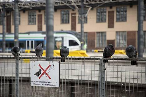 Kun matkustaminen loppuu, rautatieasemasta tulee pulujen valtakunta.