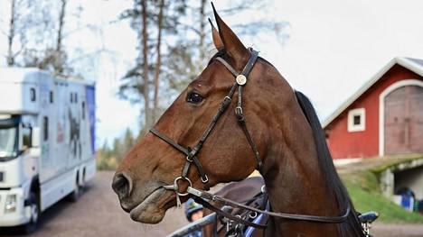 Markku Punkarin osakasvattama Mascate Match äänestettiin Vuoden Hevoseksi. Punkarin talli puolestaan valittiin Vuoden kasvattajaksi.