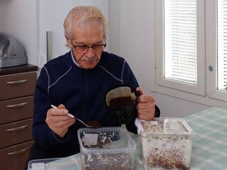 Kun sienirihmasto on vallannut edelliset kahvinporot, Eino Matinniemi ripottelee poroja lisää.