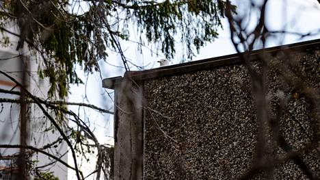 Hervannan vanhan lukion katolla asuvan lokin pesä ei näy maan tasalle. Lokin itsensä voi kuitenkin nähdä kurkkimassa pesästä.