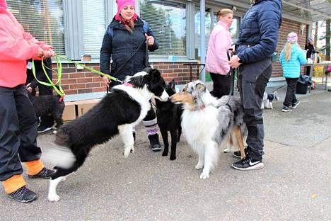 Mätsärit ovat sosiaalinen tapahtuma niin koirille kuin koiranomistajille.