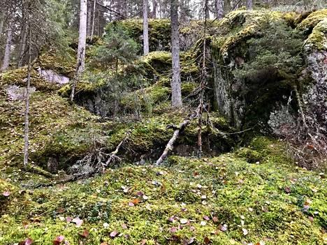 Nämä sammalet löytyvät Isojärven kansallispuistosta, mutta kuinka monta sammallajia Suomesta kaikkiaan löytyy?