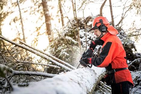 Erkki Lähteenmäki on ammatiltaan sähköasentaja. Metsänhoito on hänelle talvinen harrastus ja hyvä vastapaino leipätyölle. Sähkötöitä tehdään usein kohti seiniä ja kattoja, mutta metsässä työskennellään maata päin. Marraskuussa Lähteenmäki karsi Liisa-myrskyn jälkeensä jättämiä tuulenkaatoja.