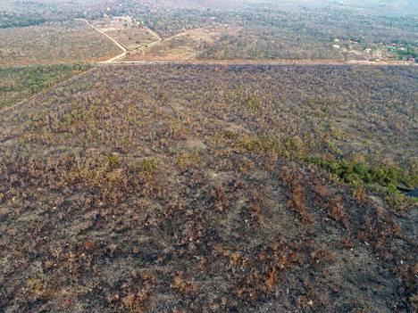 Ilmakuvassa näkyy maata, jonka tieltä sademetsää on poltettu.