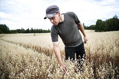 Yksi jyvän laadun merkeistä on riittävä koko. Ville Koivuniemelle viljan laatu on tärkeää, koska hän tuottaa pelloillaan elintarvikkeiden raaka-aineita.