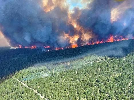Kanadassa hirmuhelteet koettelevat. Lämpöennätyksiä rikkoneet lähes 50 asteen lämpötilat ovat nostaneet kuolleisuutta poikkeuksellisiin lukemiin.