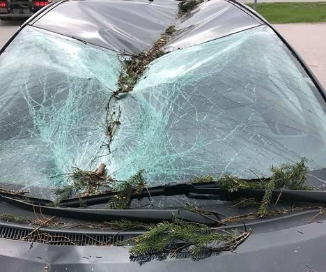 Toyotan tuulilasi ja katto vaurioituivat pahasti suuren kuusen kaaduttua sen päälle.