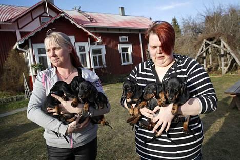 Siikaislaiset koirankasvattajat Mari Grönroos ja Susanna Kuusisto kertovat, että pentujen kysyntä on poikkeuksellisen kovaa. Mäyräkoiria kasvattava Kuusisto kertoo, että pentuja myös tiedustellaan kyseenalaisiin tarkoituksiin.