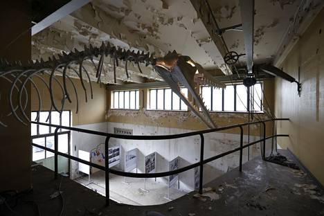 Väinölän vanhan lyhytaaltoaseman tiloissa kaunis arkkitehtuuri yhdistyy merkkeihin historiasta ja rappioitumiseen, jossa voi siinäkin nähdä omanlaistaan estetiikkaa. Kuvan luuranko on Phaser Crane Collectiven.