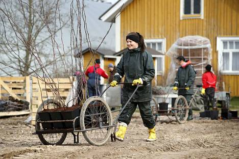 Henni Lehikoinen työskentelee Marjatila Laaksosella Köyliössä. Työpäivän jälkeen hän tietää antaneensa kaikkensa.
