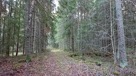 Luonnonperintösäätiön Anneli Jussila on kuvannut Holampin metsätietä.