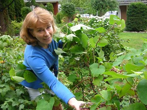 Kirsti Jokisen puutarhassa kasvaa jopa viiniköynnös.