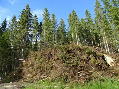 Metsähaketta olisi mahdollista hyödyntää omakotitalojen lämmitykseen soveltuvan uusiutuvan dieselin valmistuksessa.
