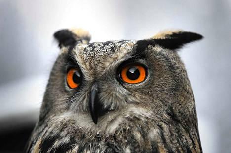 Uhanalaisia lajeja on suhteellisesti eniten linnuissa ja sammalissa.