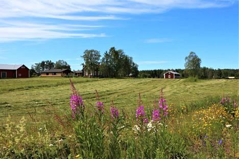 Mihin kokeiluun Merikarvia voisi lähteä? HAMA-ryhmän mielestä harvaan asuttu alue ei ole riippa vaan koko Suomen kasvun mahdollistaja!