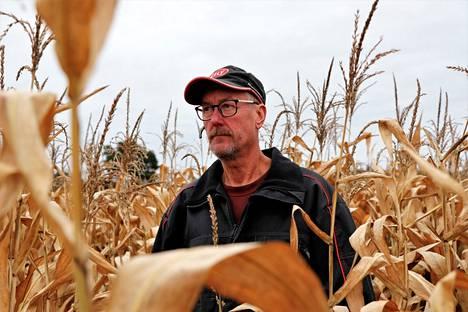 Juha Hurvi aikoo jatkaa rehumaissin viljelyä myös ensi vuonna. Tämän vuoden sadosta tuli vähintäänkin keskiverto.