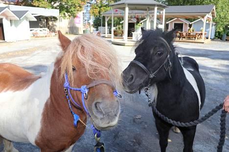 Uusien ponien nimet ovat Tiuhti (vas.) ja Viuhti. He ovat nähtävissä päivittäin omassa aitauksessaan.