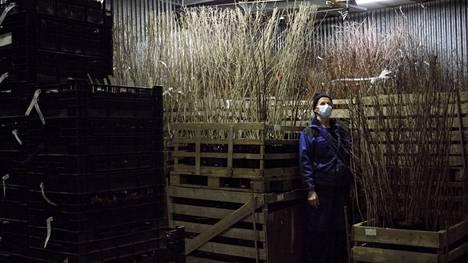 Sven Barkholt on omistanut yrityksen 27 vuoden ajan. Taimistoyrittäjäksi yleensä kasvetaan ja se on elämäntapa. Työ on kuitenkin vaativaa, sillä taimet on kasteltava myös viikonloppuisin. Yleinen ongelma alalla on, että työlle ei ole jatkajia. Olemme jäämässä ulkomaisten kasvien varaan.