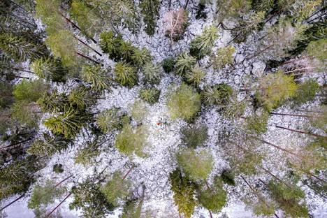 Suomen maa-alasta 75 prosenttia on metsää, kun koko Euroopan maapinta-alasta metsää on 45 prosenttia. Suomessa onkin laskennallisesti yli neljä hehtaaria metsää asukasta kohden. Tarina kertoo, että eräs satunnainen matkailija tiedusteli Suomen-vierailullaan näkemiensä metsien nimiä. Vähämetsäisissä valtioissa puulattiakin on suoranainen ylellisyys.