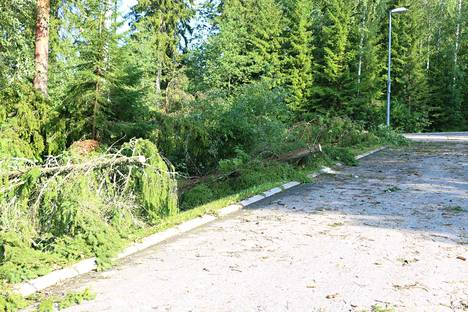 Tuuli on maanantaina katkonut puita ajoväylille Satakunnassa. Arkistokuva. Kuva ei liity mihinkään maanantain tapauksista.