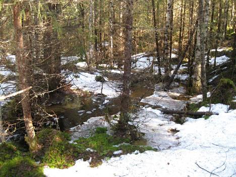 Lumi on vähissä, mutta vettä riittää. Kevätpuro Runttimäen lähimetsässä 10. huhtikuuta.
