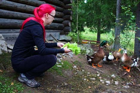 Ankat ovat tottuneet Maria Vuolukkaan jo niin hyvin, että ne uskaltavat hakea ruokaa suoraan kädestä. Jos linnuille ei löydy uutta kotia, ne saavat myös talvehtia pinsiöläisen talon pihamailla.