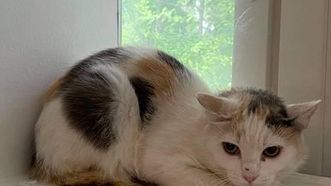 Vain noin 10 prosenttia Boondock'siin tulevista kissoista palaa alkuperäiselle omistajalleen, lopuille on etsittävä uusi koti. Kuvituskuva.