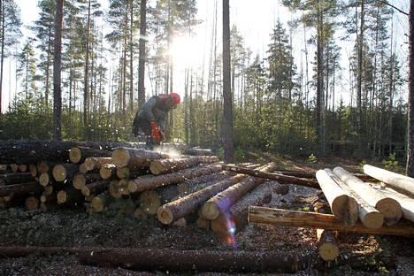Talkoolaiset kuorivat laavuun tulevia puita lauantaina. Jorma Kivessillalta työ hoitui nopeasti.