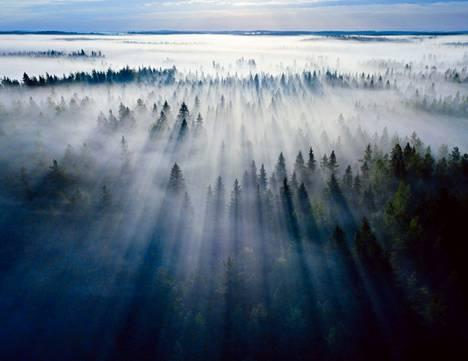 Pirkanmaan maapinta-alasta valtaosa on metsää, joka on tähän asti ollut lähes täysin yksityisessä omistuksessa. Suurella osalla suomalaisista on ollut pieni tilkku metsää. Nyt moni perikunta luopuu metsistään, ja omistus keskittyy isompiin yksiköihin. Myös sijoitusyhtiöt ovat kiinnostuneet metsistä ja maksavat niistä hyvän hinnan. Kuvassa Ruoveden Siikanevan sumuista metsää suojelualueen ulkopuolella.
