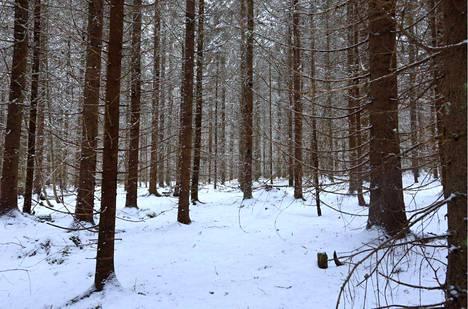 Finsilva harventaa 30-50 -vuotiasta puustoa Mäntänvuoressa helmikuussa Mäntässä.