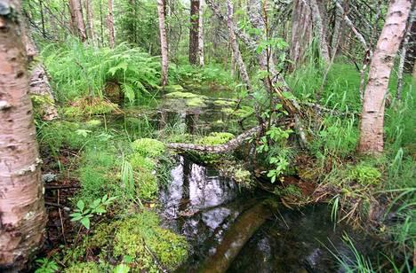 Metsäluontoa rikastuttavat erilaiset pienvedet ja erityisesti purot, joiden ominaispiirteitä ovat heikentäneet muun muassa hakkuut, ojitukset ja maanmuokkaus. Kuvituskuva.