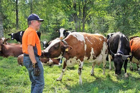 Tämän vuoden viljasadosta on tulossa keskinkertainen. Kuivan alkukesän vaikutukset näkyvät myös Paavo Ryyminin tilalla. Tilan lehmät ovat täysrehulla, mutta vilja menee myyntiin.