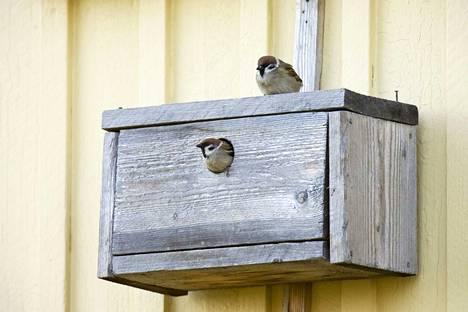 Pönttöbongaukseen voi osallistua kuka vain tarkkailemalla oman pihansa linnunpönttöjä.