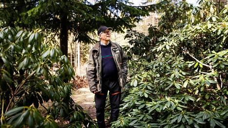 Erkki Frick on istuttanut yksityiseen arboretumiinsa tuhansia puu-, pensas-, tai kasvilajikkeita. Kuvassa on rodopensaita, joita on arboretumissa yli 800.