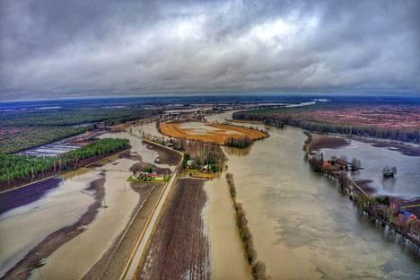 Kokemäenjoki on tulvinut pelloille Huittisissa.