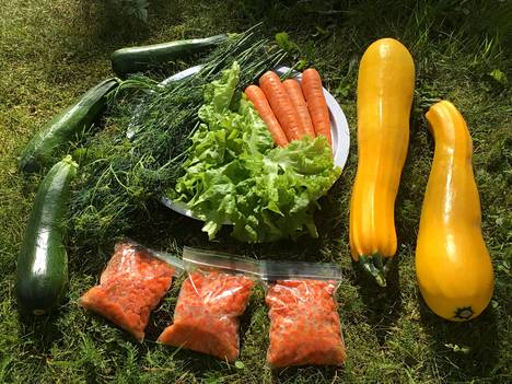 Puutarhasta riittää nyt kaikenlaista vitamiiniipitoista ja värikästä syötävää, sillä helle kypsytti hyvin ja nopeasti kasveja.