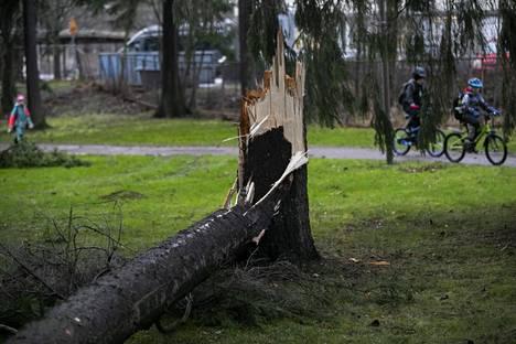 Liisa-myrsky katkoi puita eri puolilla Pirkanmaata.