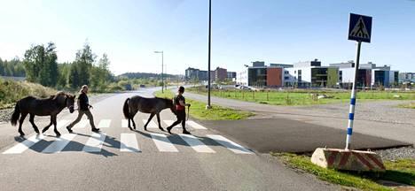 Juha Suonpää ja Mai Korte-Suonpää taluttavat Sysin ja Joikun keskuspuiston hevoshakaan Vuoreksen koulun viereen. Anniston tilalta on keskuspuistoon vain muutaman sadan metrin kävelymatka metsäpolkua. Samalla maisema vaihtuu urbaaniksi kaupunkinäkymäksi.