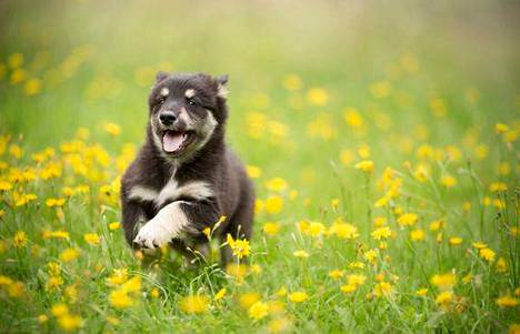 Koiranomistajan täytyy ottaa huomioon kesällä monia riskitekijöitä, jos haluaa turvata lemmikkinsä terveyden.